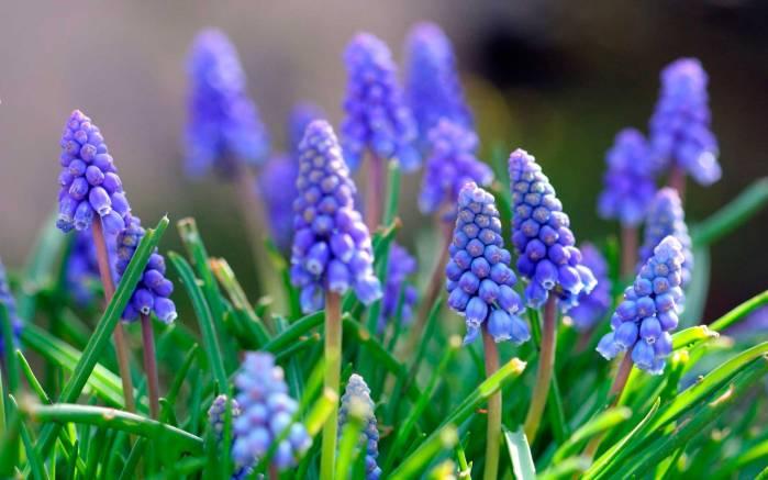 Голубые горные цветы цветы в горах