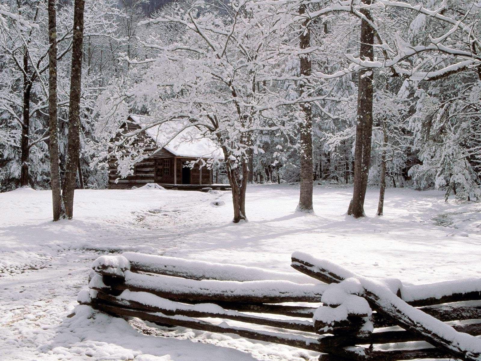 Обои Для Рабочего Стола Зимний Лес Широкоформатные