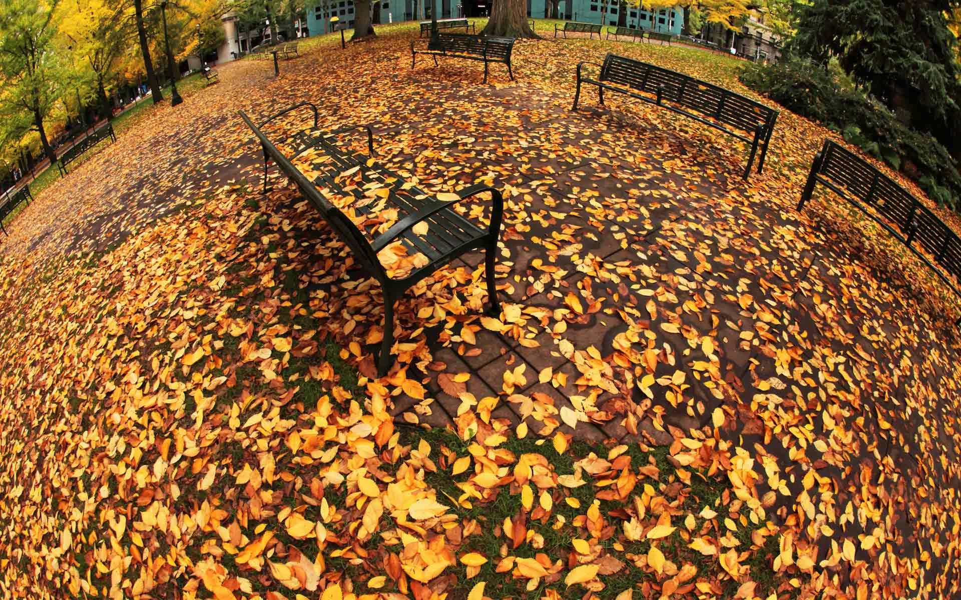 Широкоформатные картинки осень в городе