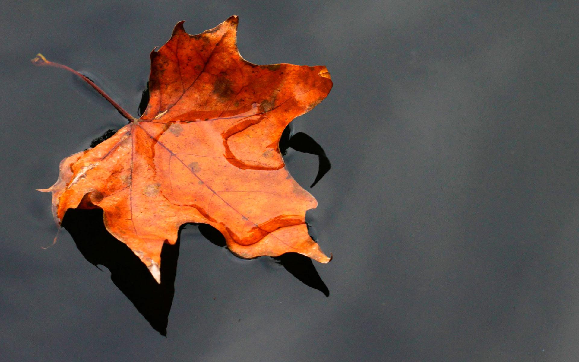 Картинки небо листик осенний