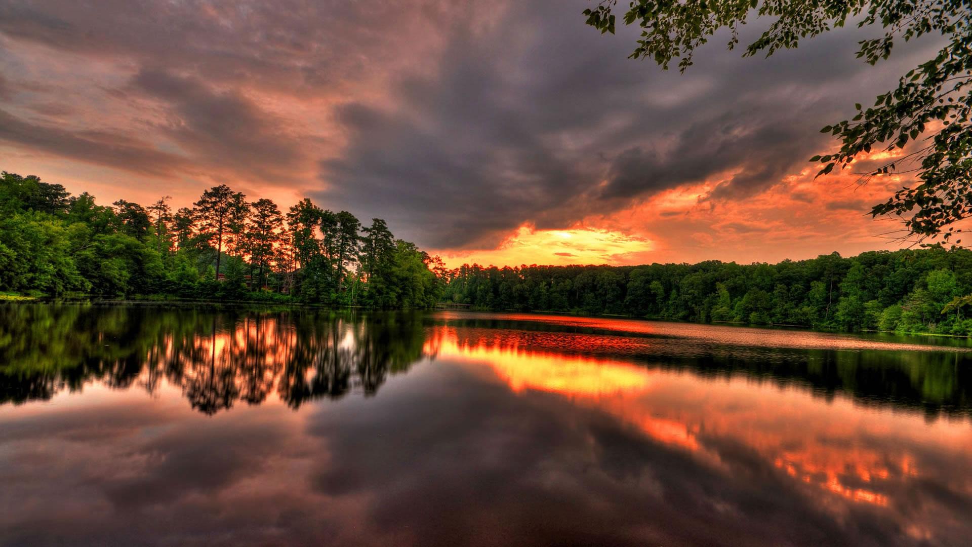 Обои восхитительный лес лесное озеро