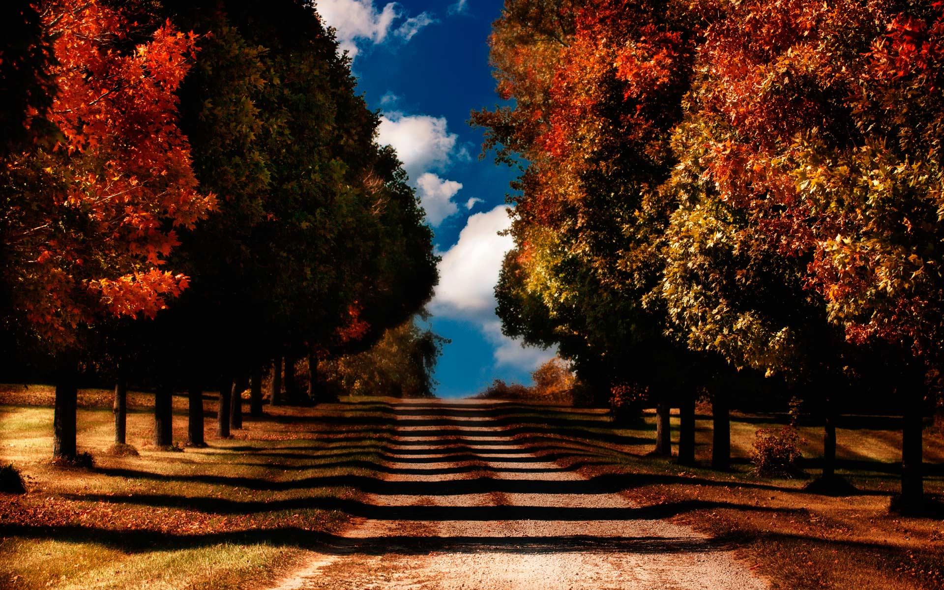 Обои красивая осень красивые цвета