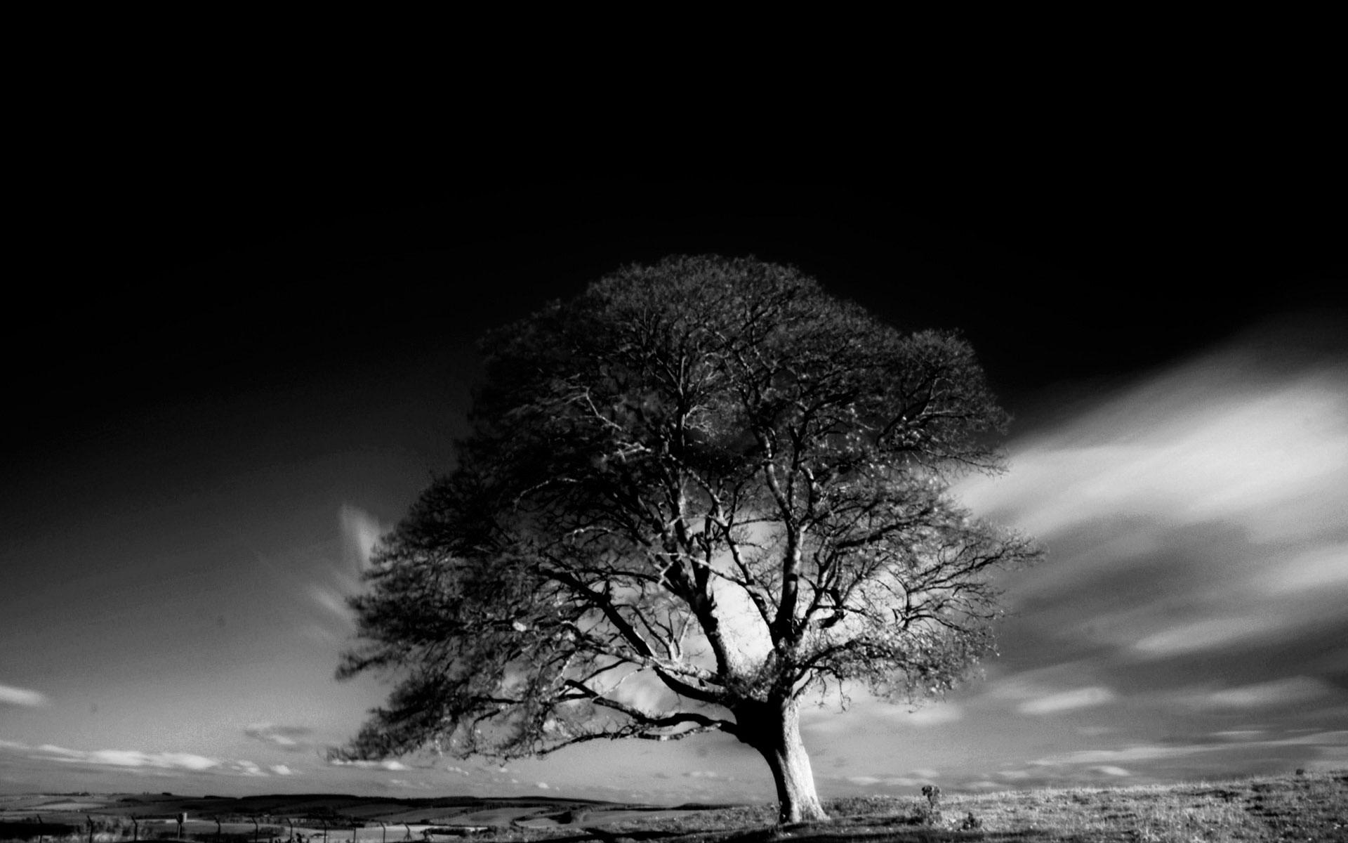 Обои Дерево на ветру, картинки - Обои на рабочий стол ...