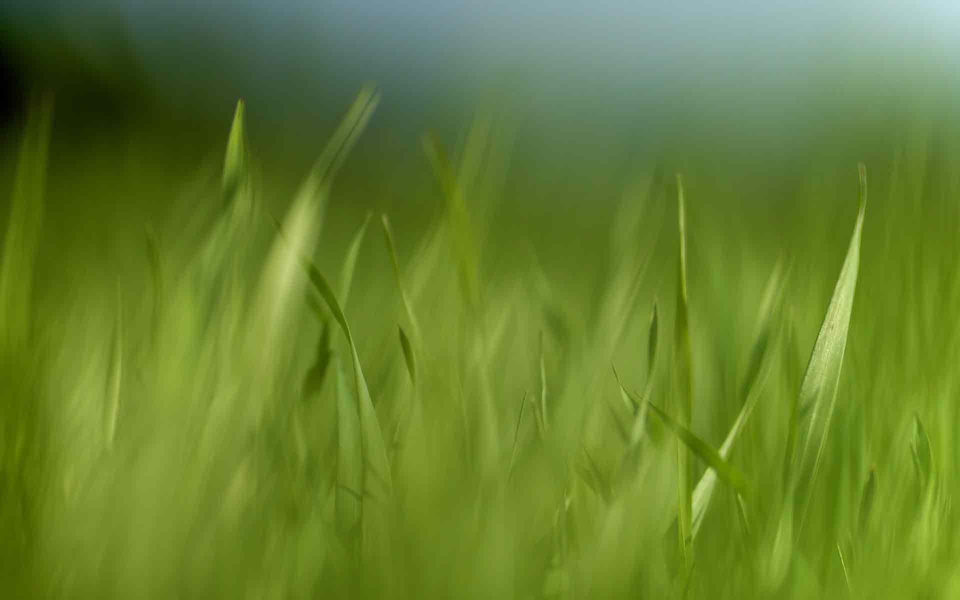 Обои трава картинки фото обои для