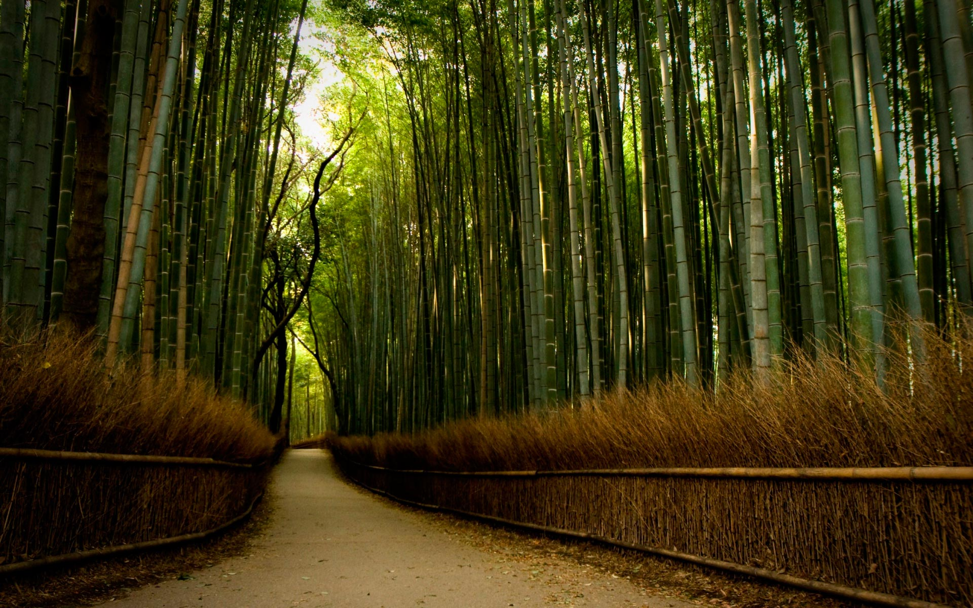Лес дорога через бамбуковый лес