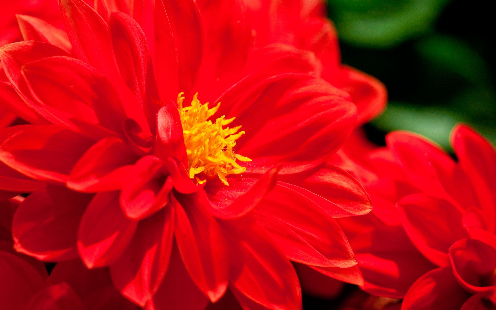 Цветы уссурийск на пушкина