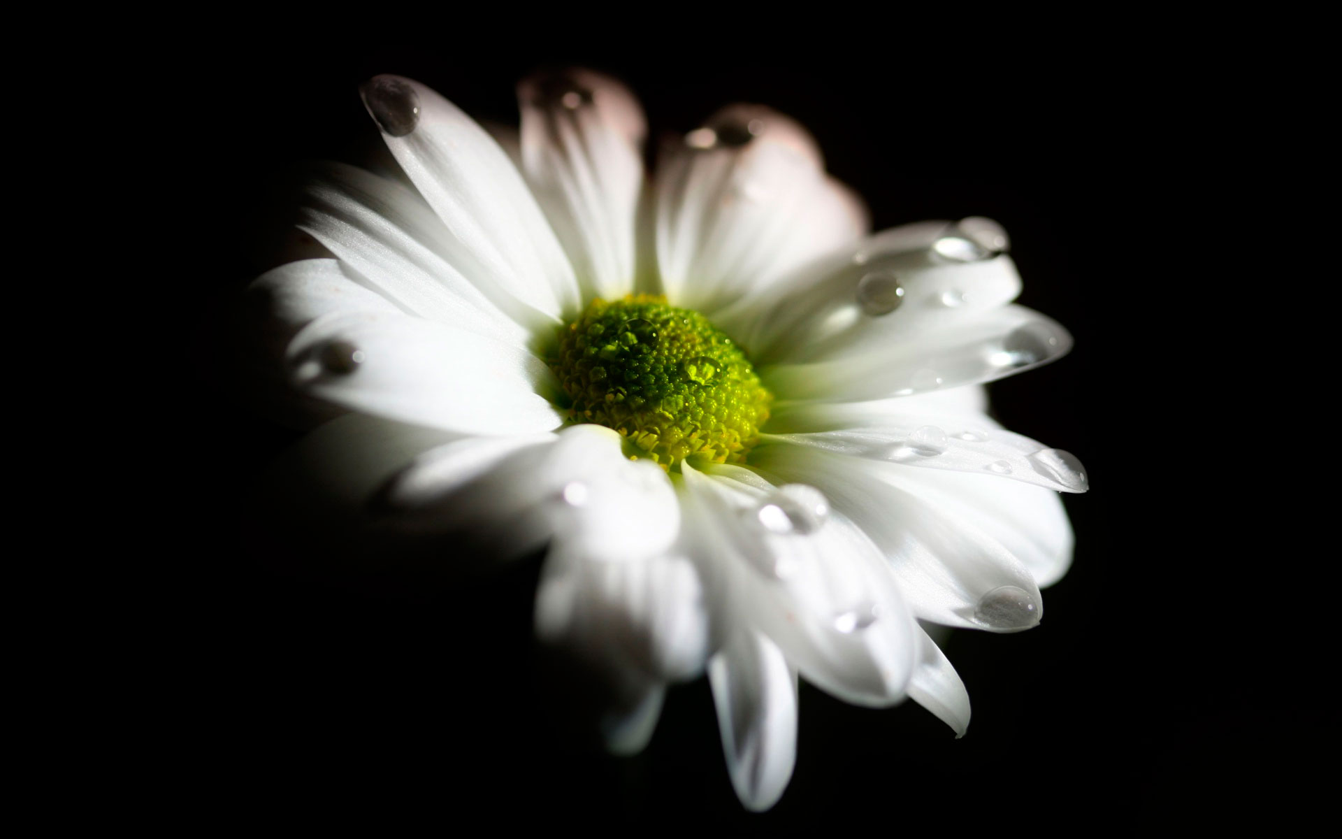 Цветы на черно белом фоне