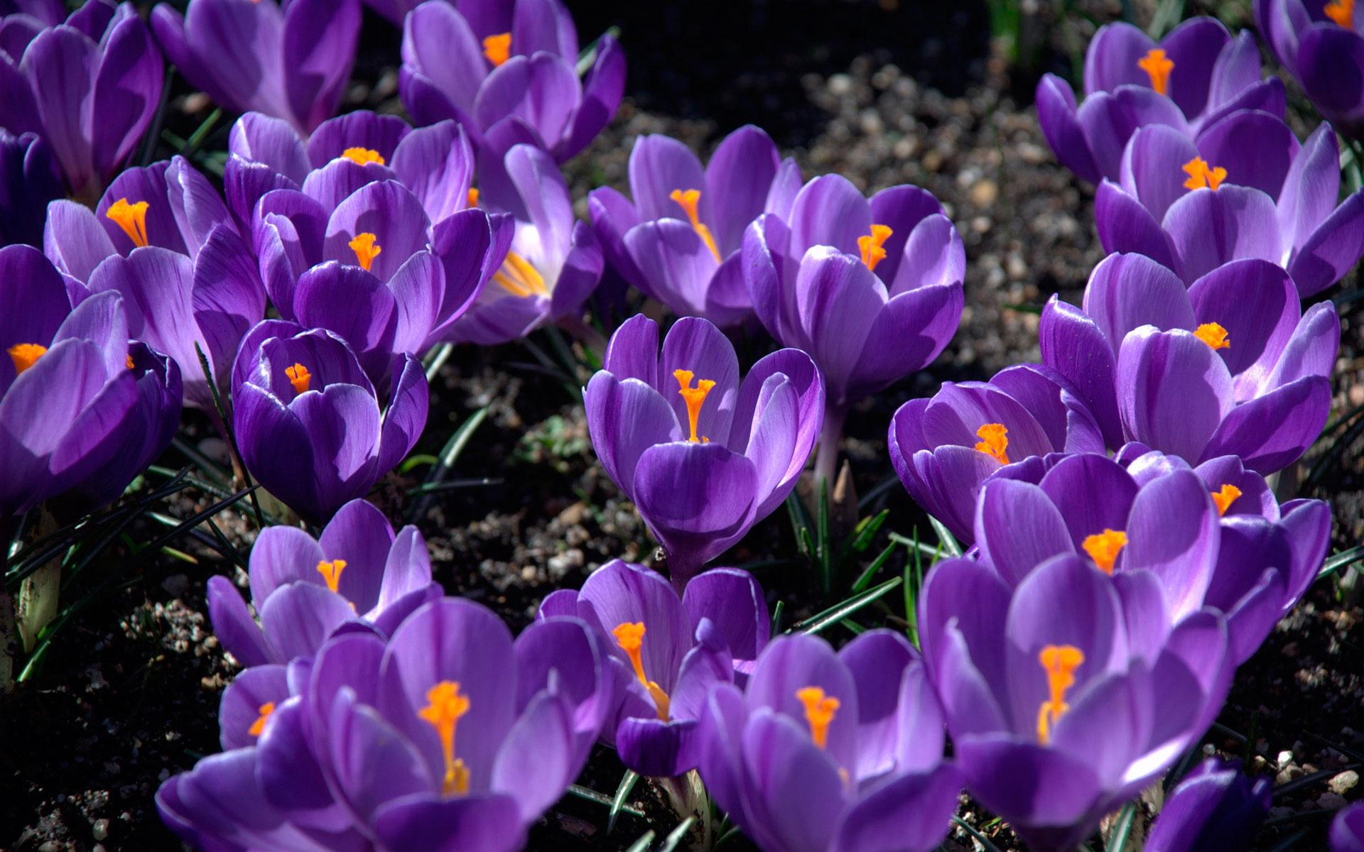 Обои аромат весны картинки фото обои