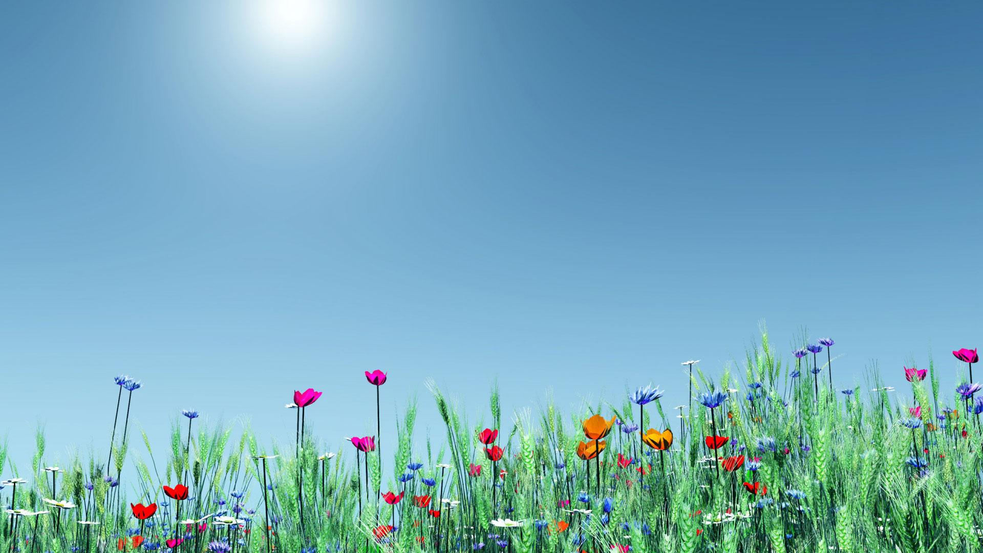 Обои цветы, широкоформатные. Природа foto 14