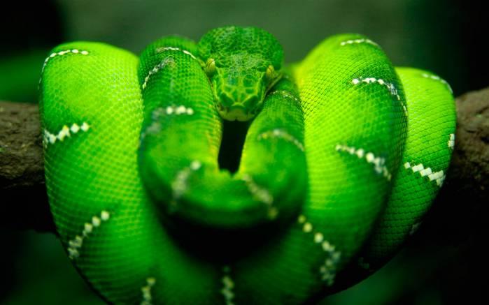 Змея зеленая змея на ветке дерева