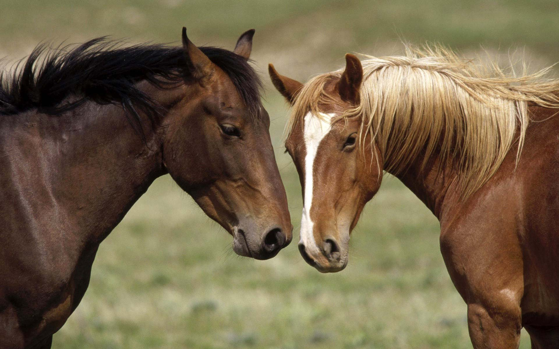 16 ноя 2012 испытания племенных лошадей