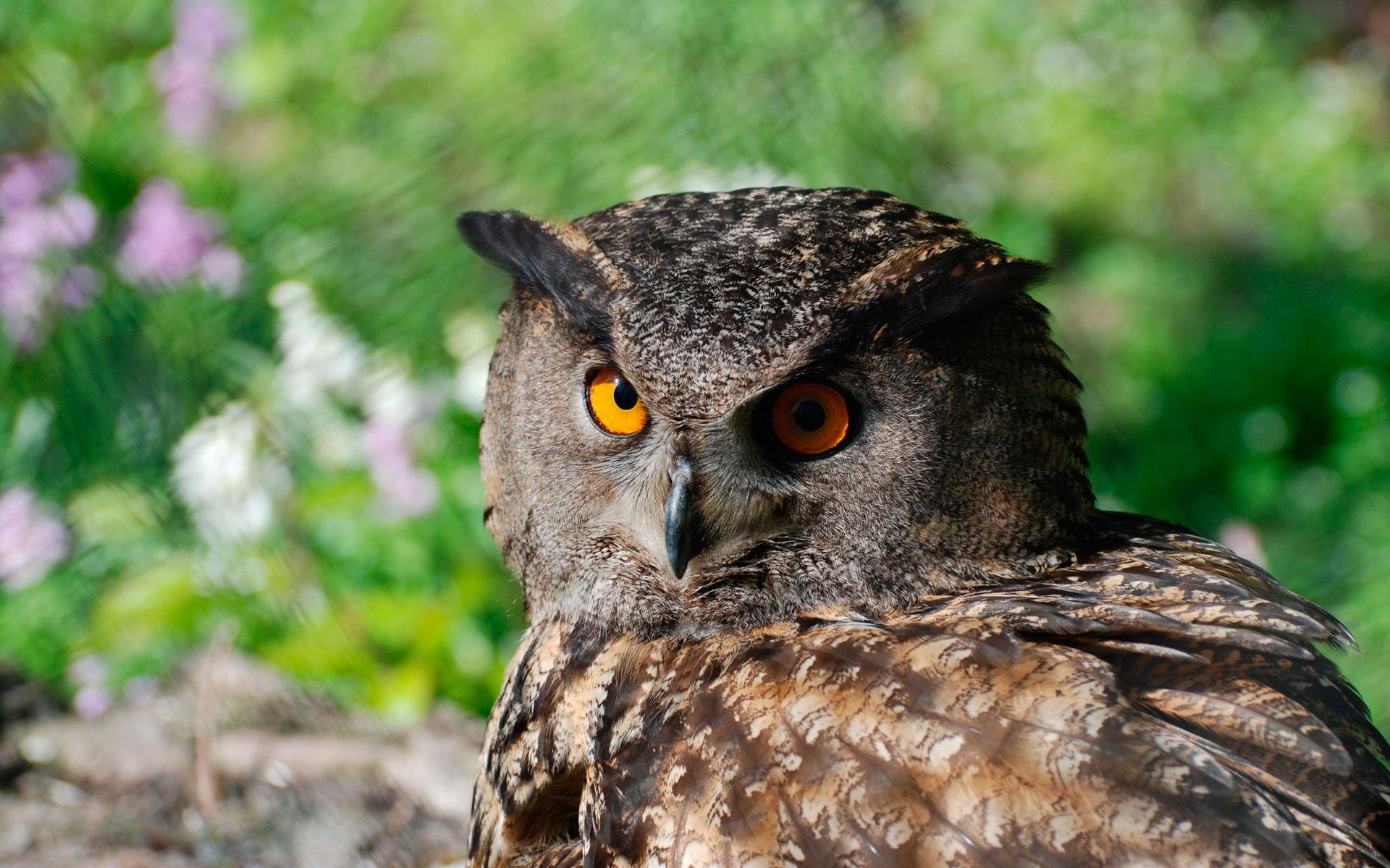 Изображение совы картинки - 6e72a
